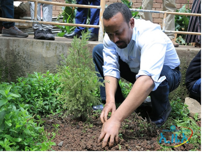 Ethiopia Plants 350 Million Trees in 12 Hours